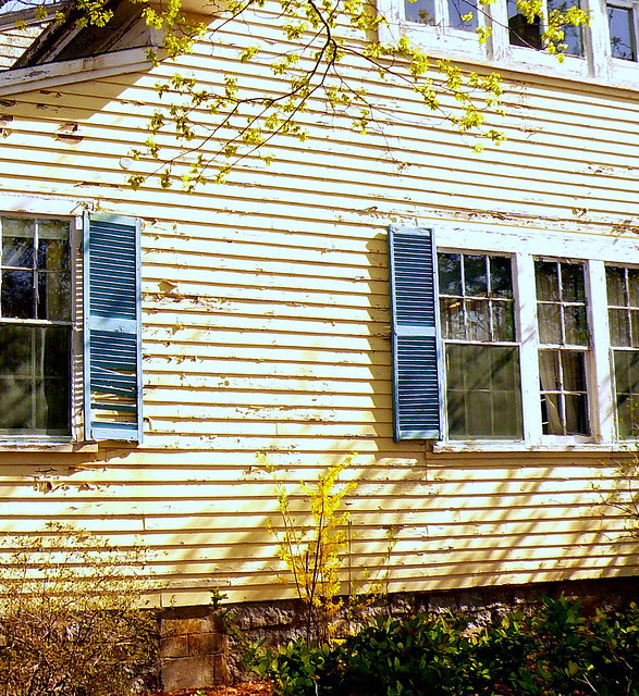 Yellow House in New England with Blue Shutters in Springtime ...
