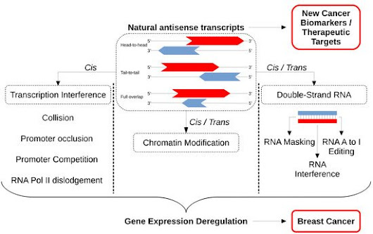 Natural Antisense Transcripts: Molecular Mechanisms and Implications in Breast Cancers