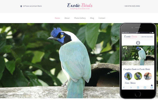 Exotic Birds a Animal Category Flat Bootstrap Responsive Web Template by w3layouts
