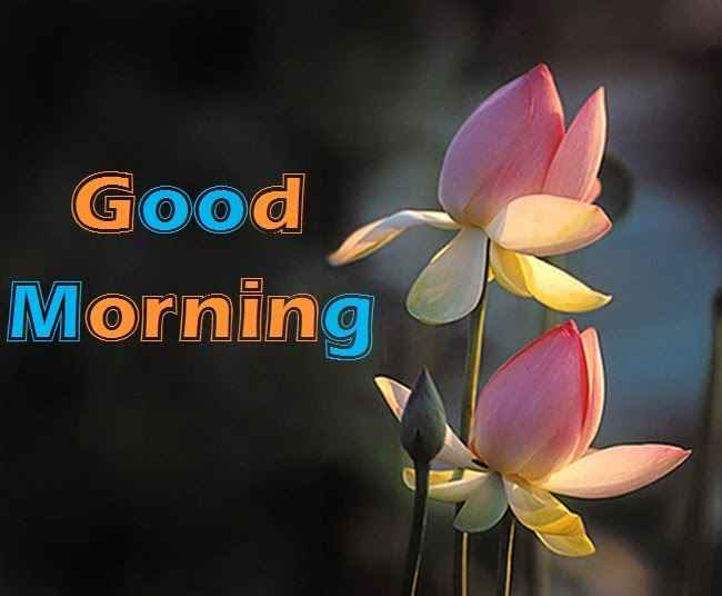 Best Good Morning Images For Whatsapp Free Image Download