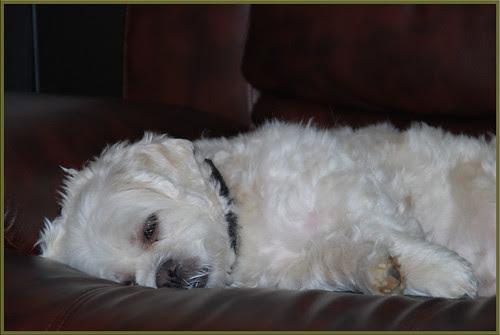 Sleepy-Dory