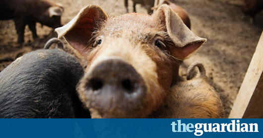 The Commuter Pig Keeper triumphs at oddest book title award | Books | The Guardian