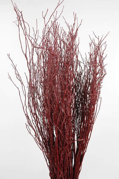 Natural Red Huckleberry Branches