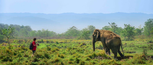 Chitwan Wildlife Tour|Chitwan Wildlife Tour Package|Chitwan Wildlife Tour Cost
