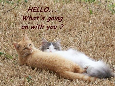 Friendship, Hello Cats! Free Hello eCards, Greeting Cards
