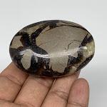 Septarian Nodule PalmStone, Natural Spetarian Palm-Stone Massage Stone