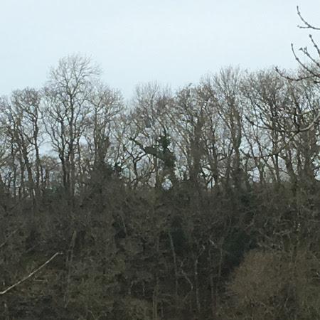 treeswalking.jpg