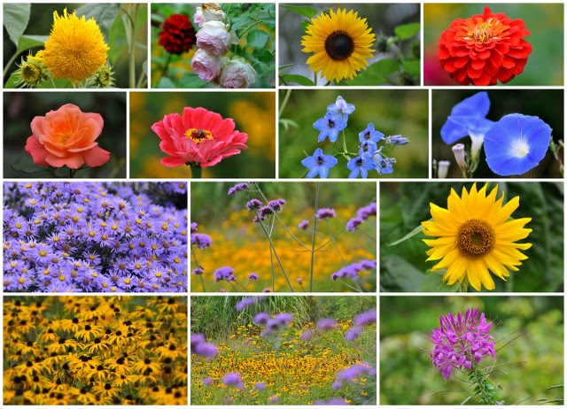 Blumen Collage