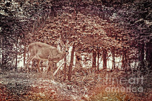 Doe In The Woods by Sharlotte Hughes