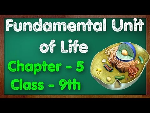 C - 5, Fundamental Unit of Life || MCQs