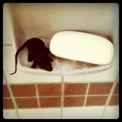 Shower rats