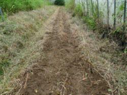 草をかきわけ種をまいた