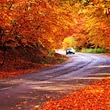 Top 15 Fall Driving Tips, Hazards For Ontario Fall Driving