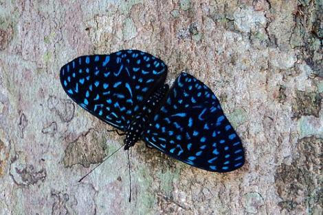 Por: LepidopteroFilo