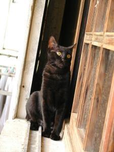 Shoosha the guardcat