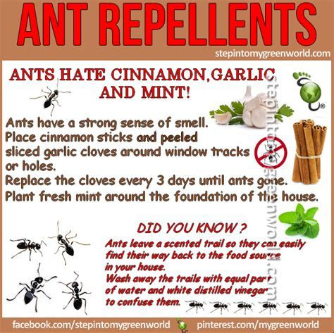 DIY ant repellents   Step Into My Green World   STEPin2