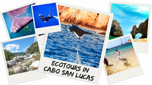 Ecotours in Cabo San Lucas: whale sharks, sea lions and more - 2 Travel Dads