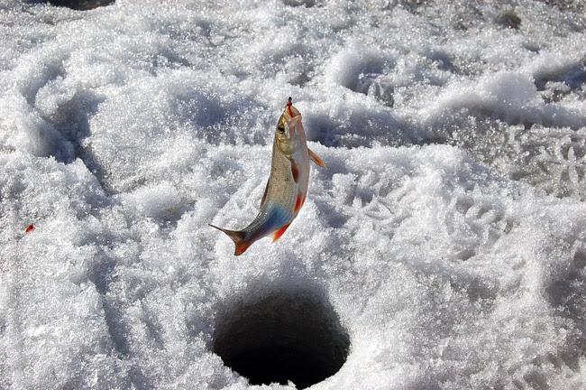 Рыбалка в марте, рыбалка по последнему льду, ловля рыбы в марте, ловля по последнему льду, ловля леща по последнему льду, ловля плотвы по последнему льду, ловля окуня по последнему льду, ловля на водохранилище по последнему льду, мартовская рыбалка, как ловить рыбу в марте, клев по последнему льду, ловля уклейки в марте