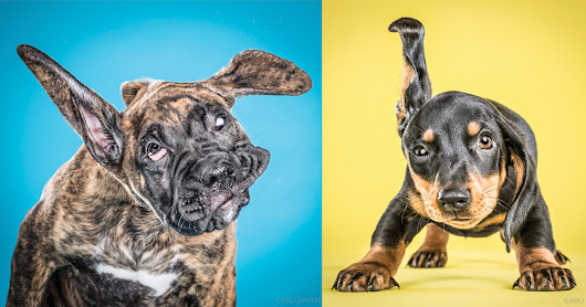 Wacky High-Speed Portraits of Puppies Caught Mid-Shake by Carli Davidson