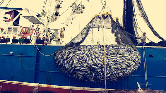 The government: Stop overfishing