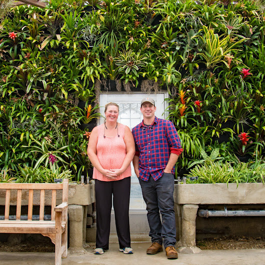 Kingwood Center Gardens Greenhouse Expands Bromeliad Collection Vertically