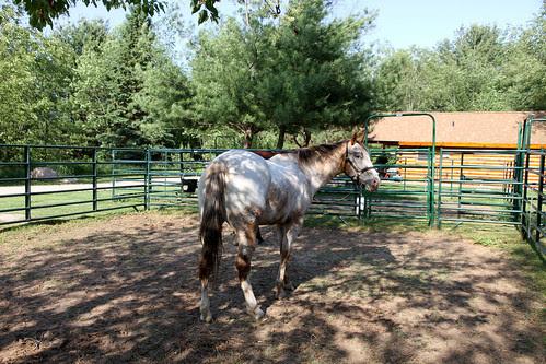 spur ranch 3
