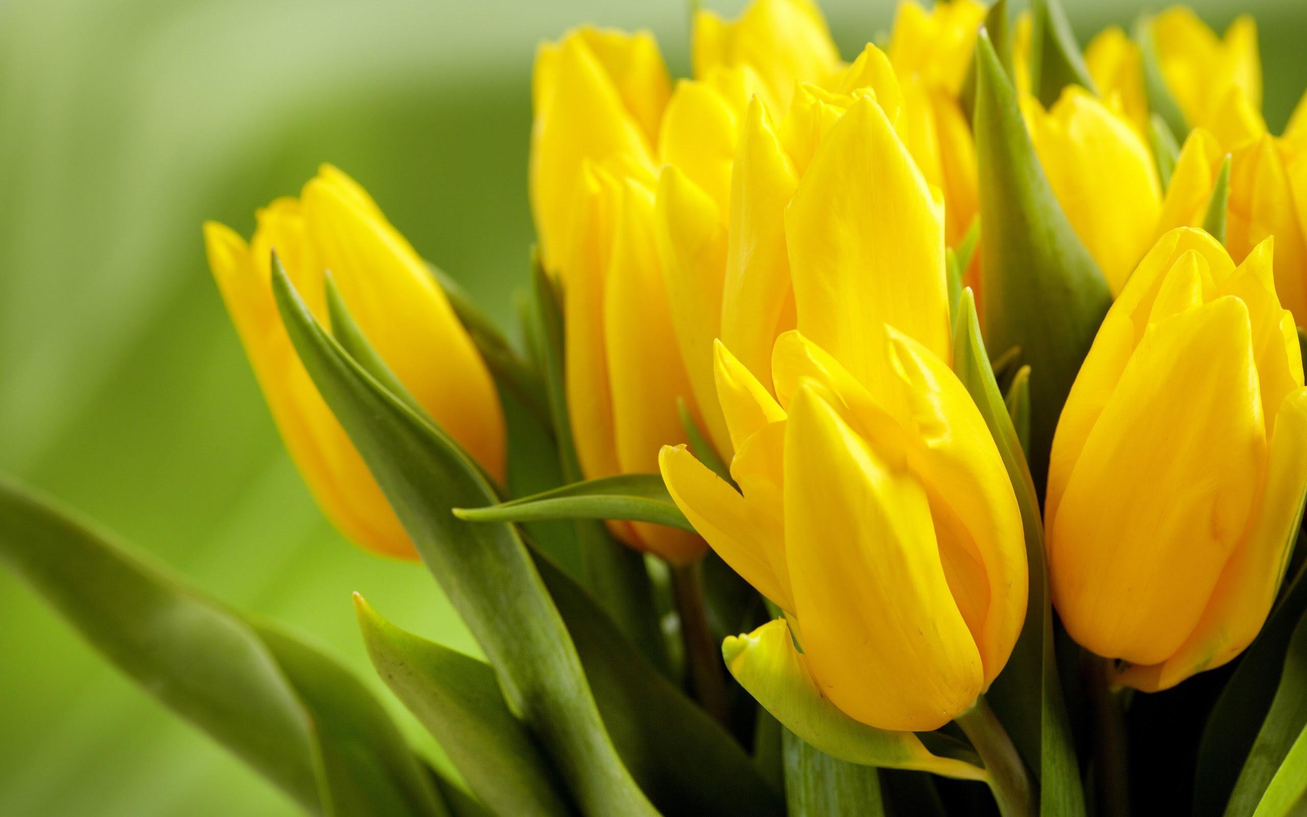Yellow Flowers Hd Wallpaper 2560x1600 23763