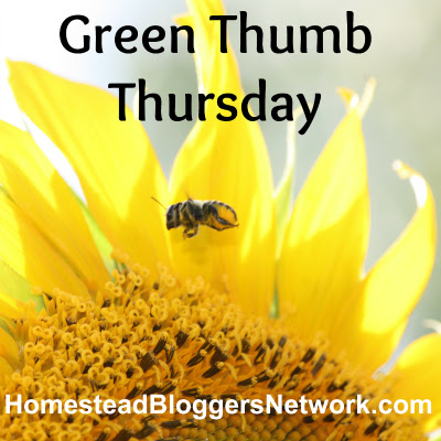 Green Thumb Thursday Linkup