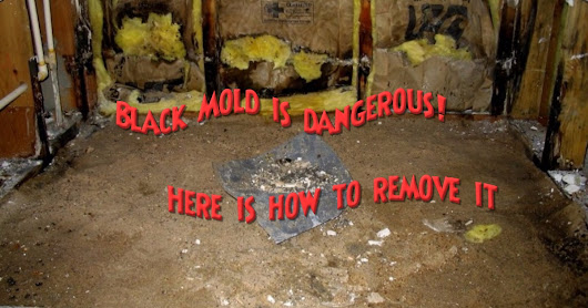 Black Mold is dangerous! Here is how to remove it - Healthy Lifestyle