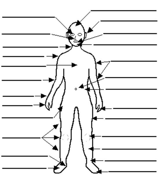 Torso Diagram