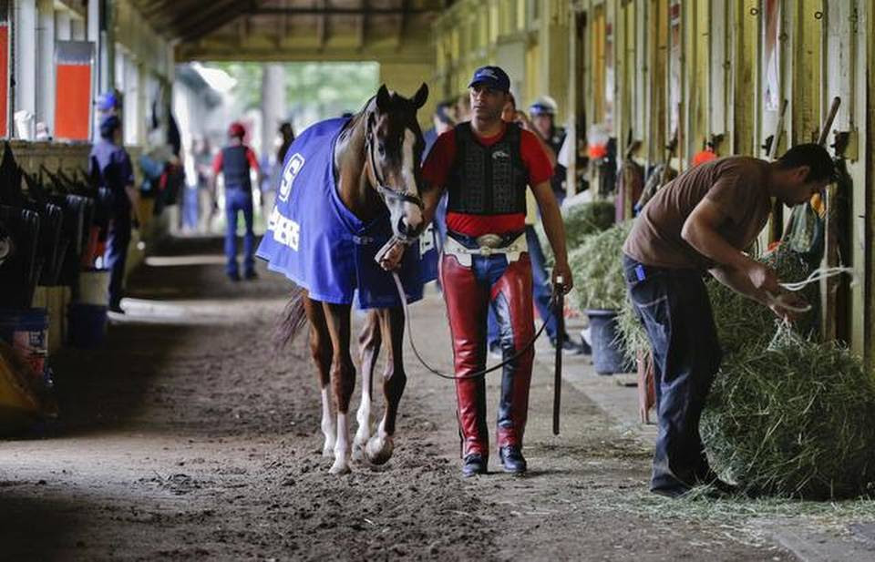 Exercise rider Willie Delgado hot walks California Chrome after a workout, Wednesday, June 4, 2014, in Elmont, N.Y. The Kentucky Derby and Preakness Stakes winner will attempt to become the first Triple Crown winner since Affirmed in 1978 when he races in the 146th running of the Belmont Stakes on Saturday. (AP Photo/Julie Jacobson)