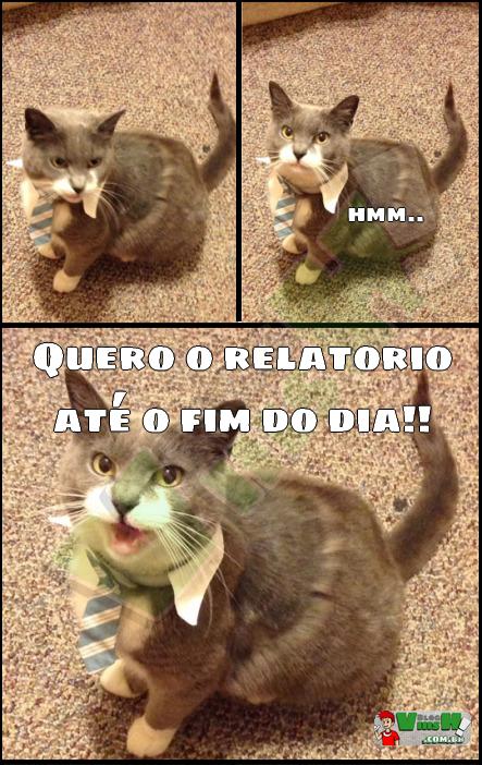 Blog Viiish - Não deve ser fácil ter um gato chefe