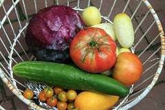 harvest  042