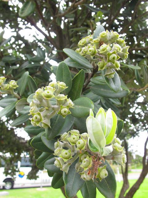 Flowers, Tree, Plants Melbourne 2012