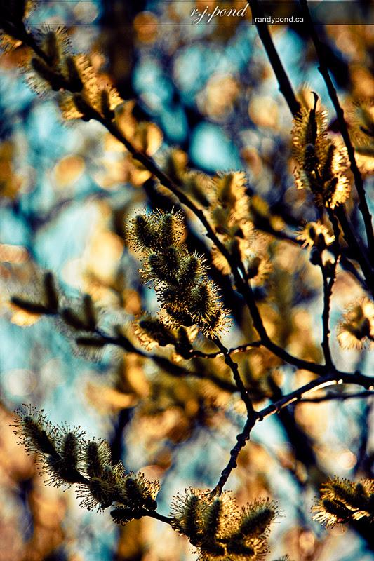 ~ 111/365 Spring Tree ~