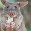 In case you were wondering: HeroRATs - Talk Science to Me