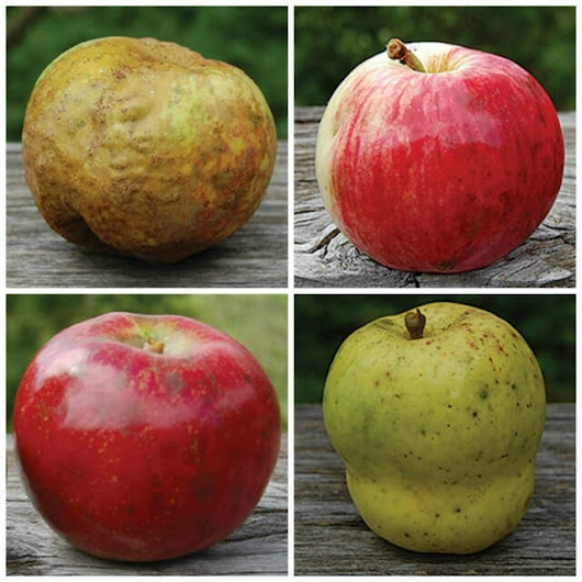 antique apples with dan bussey of seed savers exchange - A Way To Garden
