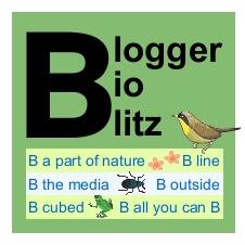 Blogger BioBlitz full-size logo, yellow bird