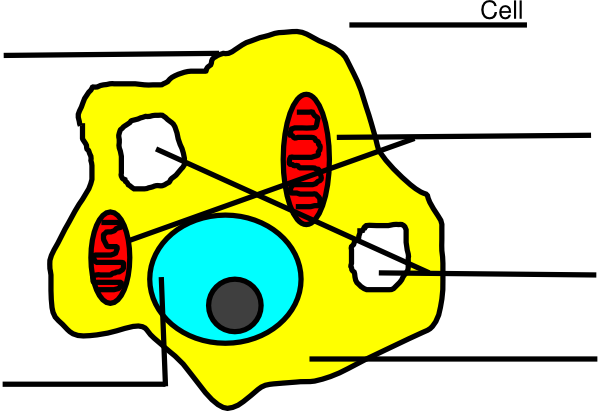 Free Animal Cell Unlabeled, Download Free Clip Art, Free ...