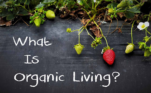 What Is Organic Living And How To Lead An Organic Lifestyle? (Full Guide)