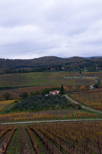 Laudemio blogtour nov. 2013