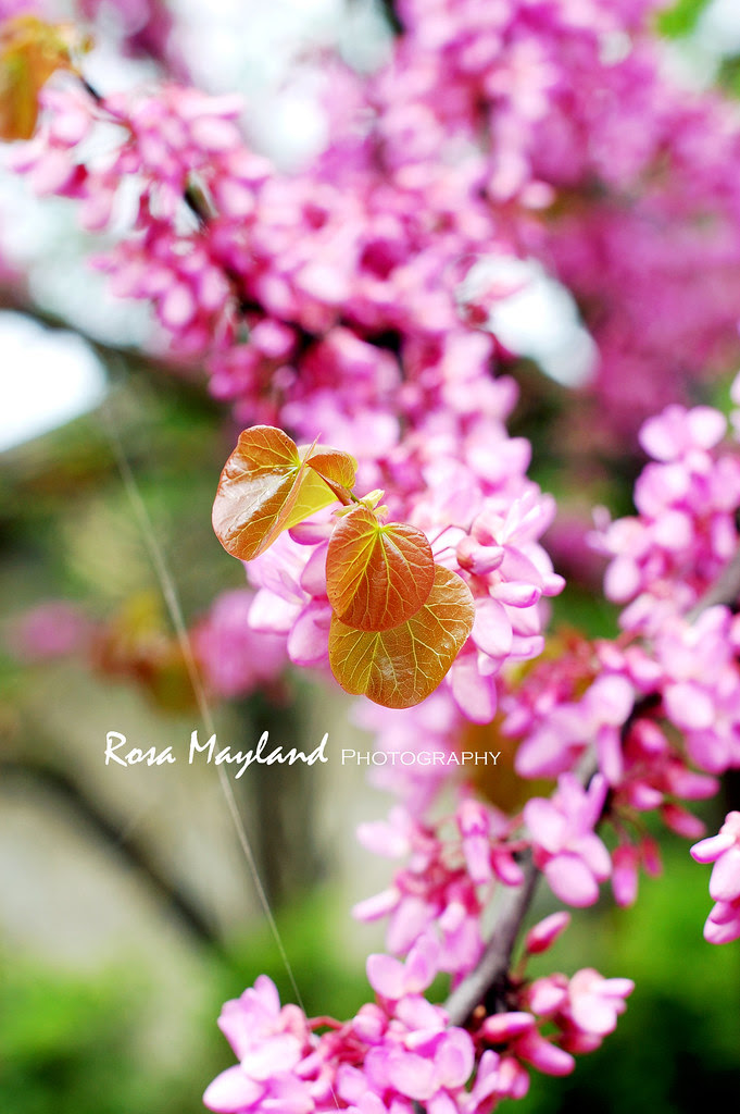 Spring 2013 May 10 4 bis