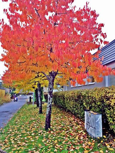 autumnal suburb