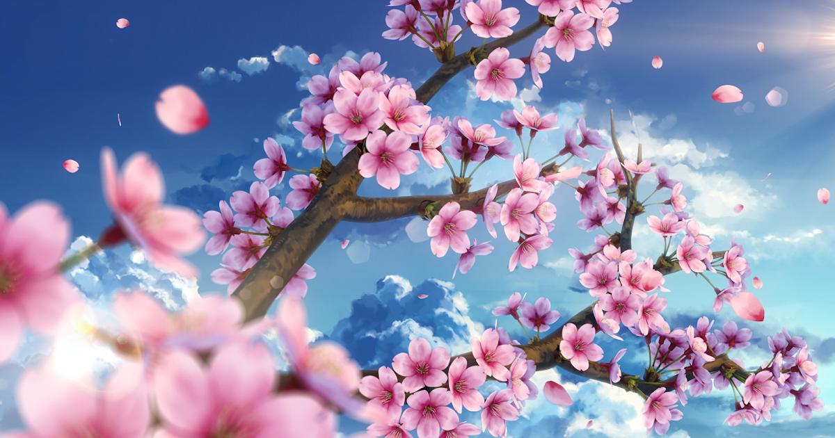 20 Beautiful Cherry Blossom Anime Wallpaper Phone Anime Top Wallpaper