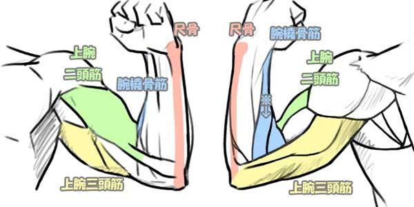 腕まわり 腕の動き方 Kitajimaのお絵かき研究所