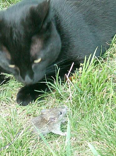 hello mouse!