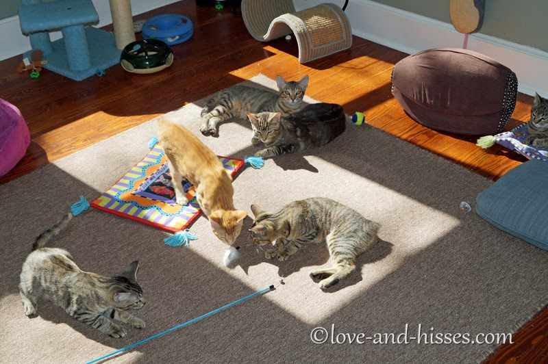 six kittens lounging or playing on a rug in the sun