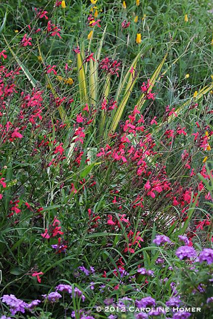 Perennials and Bermuda grass