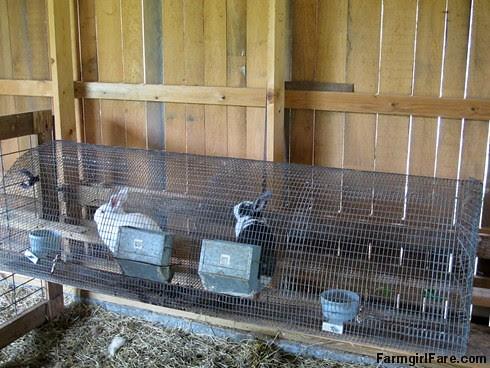 (27-19) Don't tell the sheep that we now it the bunny barn - FarmgirlFare.com