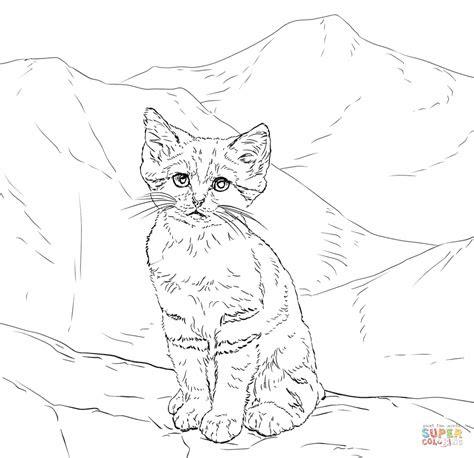 realistic kitten drawing  getdrawings
